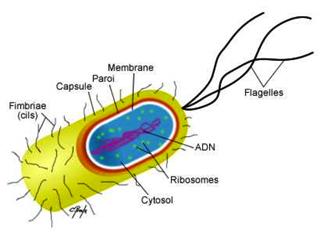 traitement des molécules par UV